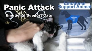 Emotional Support Animals Stop Panic Attack - Caught on Camera