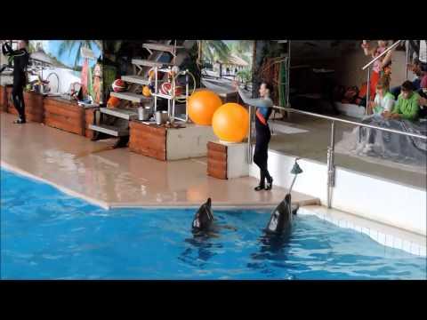 как добраться до дельфинария в челнах