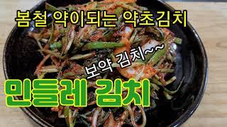 간에 좋은 토종 약초 흰민들레김치 담는 레시피~~~