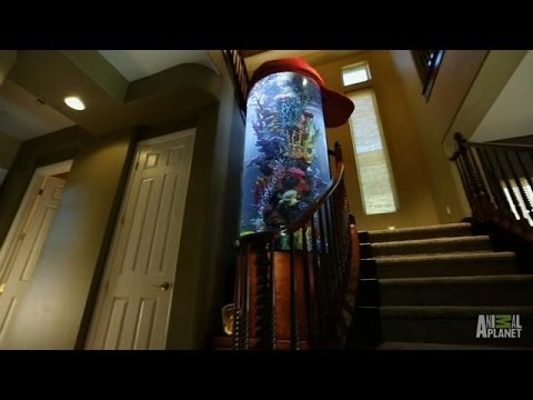Shane Victorino's Baseball Cap Aquarium Revealed | Tanked