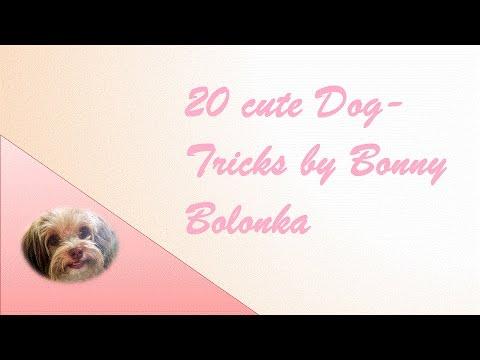 20 cute Dog-Tricks by Bonny Bolonka