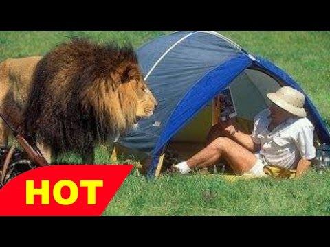 Wildlife Documentary Lions Attack Hippo BBC Discovery Documentary
