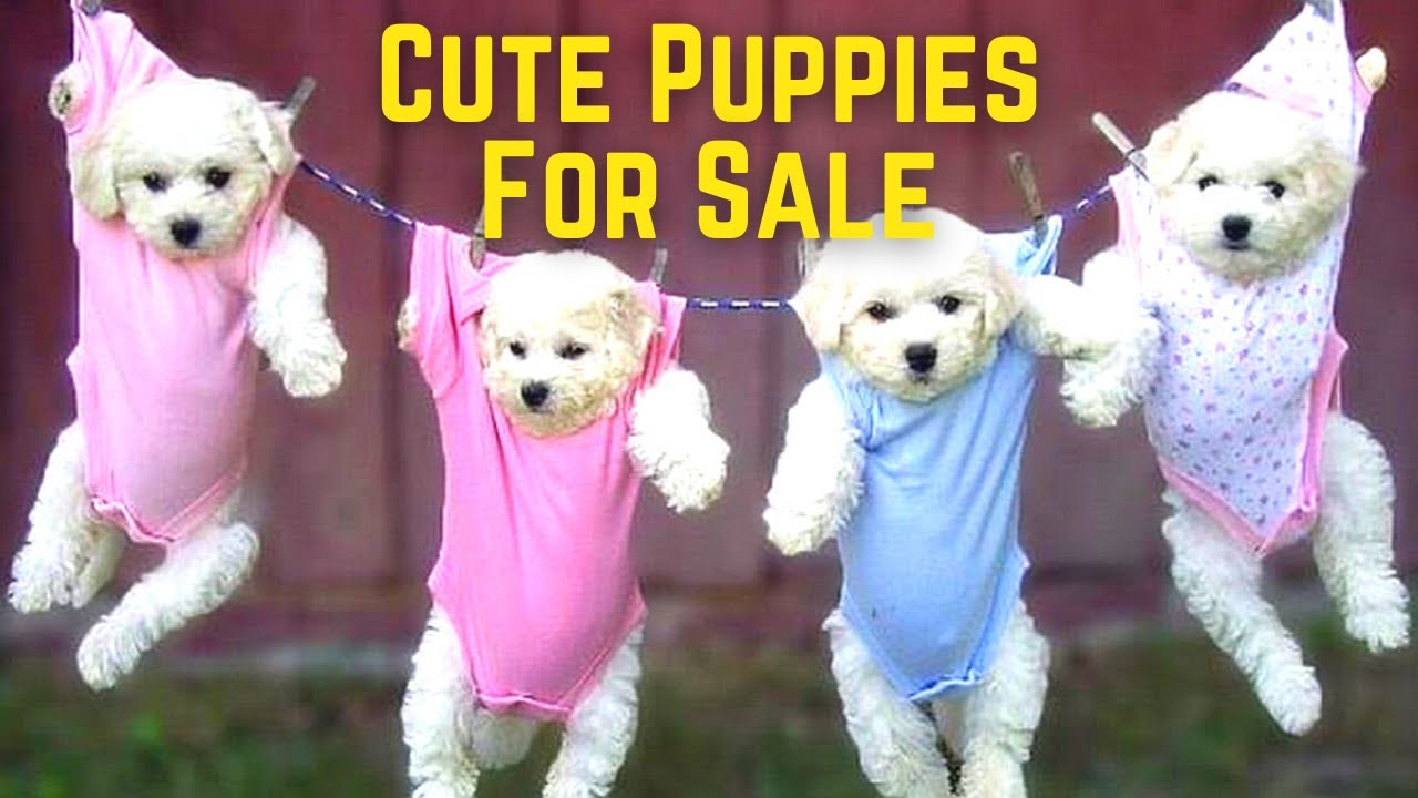 Cute Puppies For Sale Under 100 Pounds