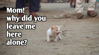 People enjoying while abandoned kitten cries for his mom | Saddest Kitten You've Ever Seen