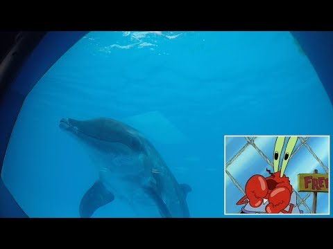These dolphins enjoy watching SpongeBob SquarePants—and it could be good for them