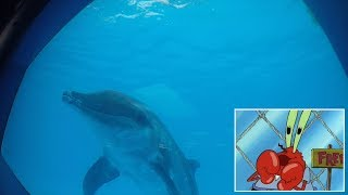 Snippet: Dolphins enjoy TV