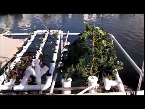 Sea Farm 1