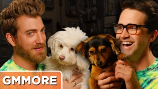 Rhett & Link Dog Update