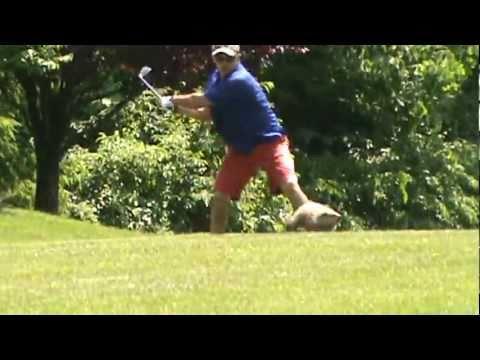 chasing a gopher | FunnyDog.TV
