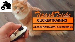 """🔥""""Clickern"""" mit Katze - Anleitung für Anfänger - Tipps& Tricks - Clickertraining mit Katze"""