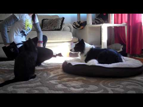 Train Your Dog The 'On Your Bed' Dog Command