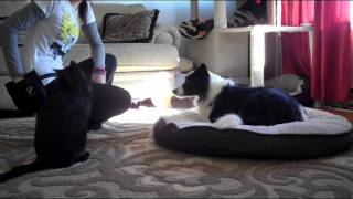 "Train Your Dog The ""on Your Bed"" Dog Command"