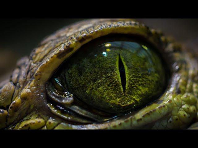Horisone & NoNameLeft - Reptile (Original Mix)