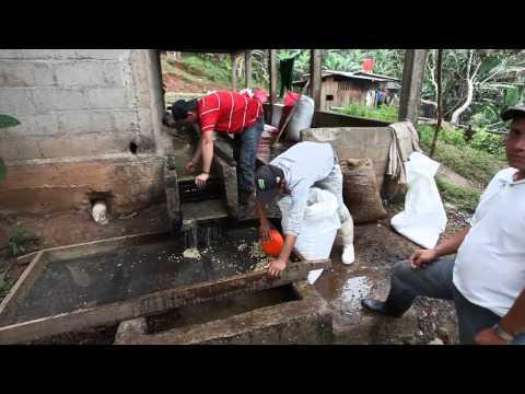 Il caffè coltivato all'ombra - viaggio in Nicaragua