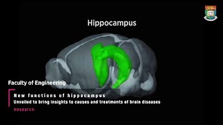 New functions of hippocampus unveiled
