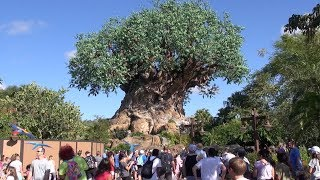 Disneys Animal Kingdom 2019 Tour and Overview Detailed Theme Park Tour Orlando Florida YouTube Videos