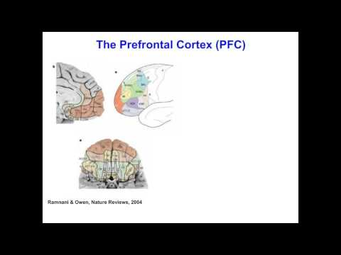 Rita Goldstein - The neurobiology underlying drug addiction - lessons from multimodality imaging and