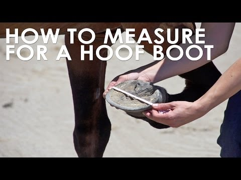 How To Measure Your Horse for Hoof Boots