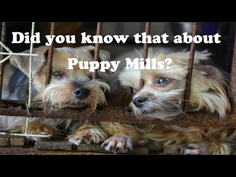Did You Know that About Puppy Mills???