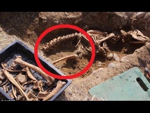 The Legendary Devil Dog Black Shuck Skeleton Found