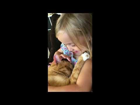 Little Girl Sings Lullaby To Sleepy Kitty