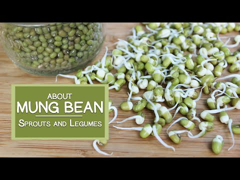 About Mung Bean Sprouts and Legumes, How to Sprout Them