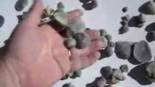 Introduction to Fossil Sea Shell BRACHIOPODS pt 2 of 4