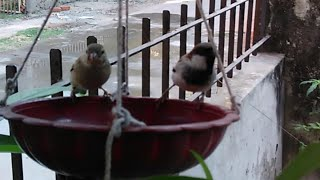 World Sparrow Day - Our daily Guest