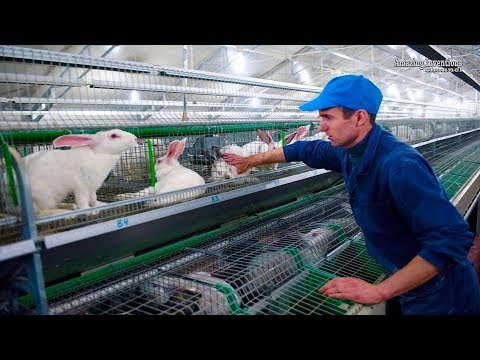Intelligent Technology for Rabbit Farm Amazing Technology for Agriculture Modern Farm for Rabbits