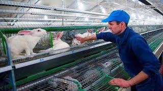 Intelligent Technology for Rabbit Farm Amazing Technology for Agriculture Modern Farm for Rabbits