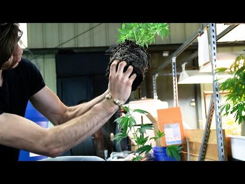 Root Circling is Not the Problem with Plastic Pots - Kevin Jodrey from Wonderland Nursery