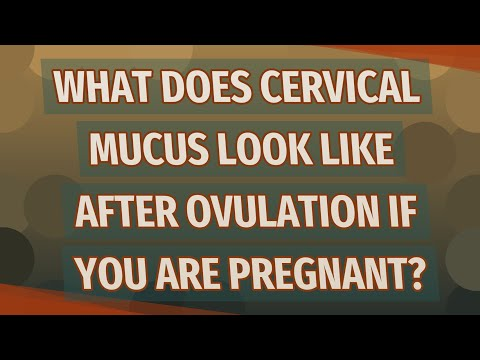 What does cervical mucus look like after ovulation if you are pregnant?