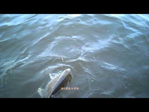 Yardley PA Carp Fishing