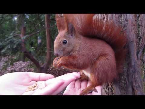Eichhörnchen füttern in Berlin