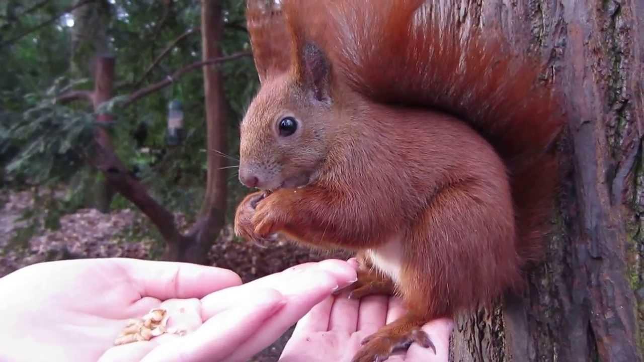 Youtube Eichhörnchen