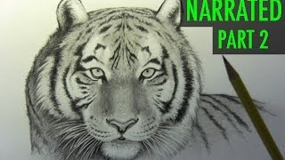 How to Draw a Tiger, Part 2: Shading [Narrated Step by Step]