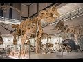 Museum of Zoology reopens thanks to mammoth volunteer effort!