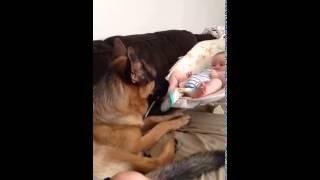 German Shepherd And Baby Are Best Friends