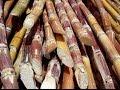 Nuevas Tecnologías en Cultivos de Caña de Azúcar - TvAgro por Juan Gonzalo Angel