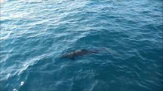 Manuel Antonio Catamaran Adventures - Tour de Delfines