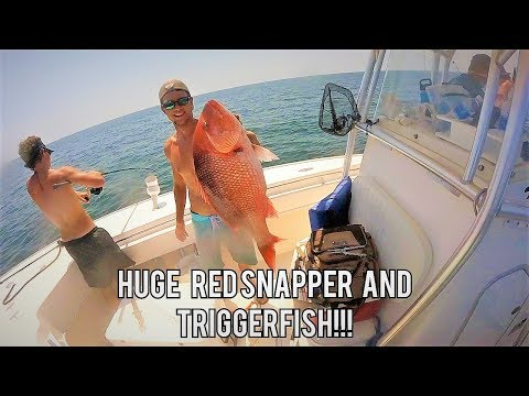 Florida Offshore Fishing - BIGGEST TRIGGERFISH I'VE SEEN! Catching Red Snapper & Triggerfish!
