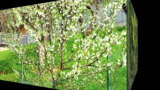 Canto di Primavera. Orchestra Bagutti