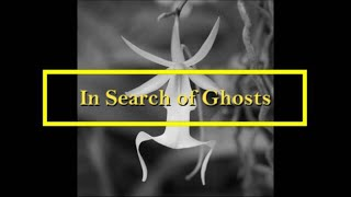 In Search of Ghosts