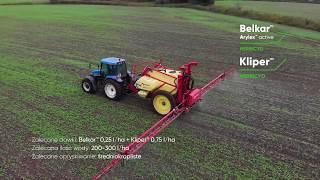 Belkar™ + Kliper™ - Innowacyjne, kompletne rozwiązanie na kluczowe chwasty w rzepaku jesienią.