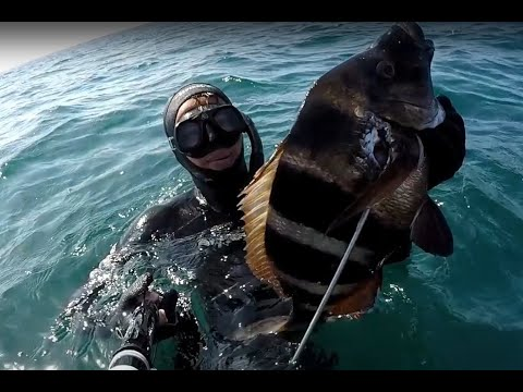 Spearfishing in Morocco with beautiful moments /la chasse so