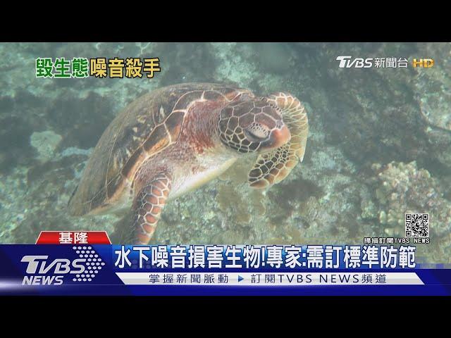海洋生物無形殺手!海底噪音創新高 專家:船舶.水下施工危害大|十點不一樣 20210227