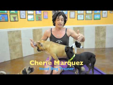 Dog Training In Fort Lauderdale: What We Offer