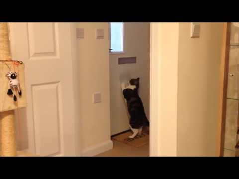 Smart Cats | Funny and Smart Animal | Smartest Cats Clips