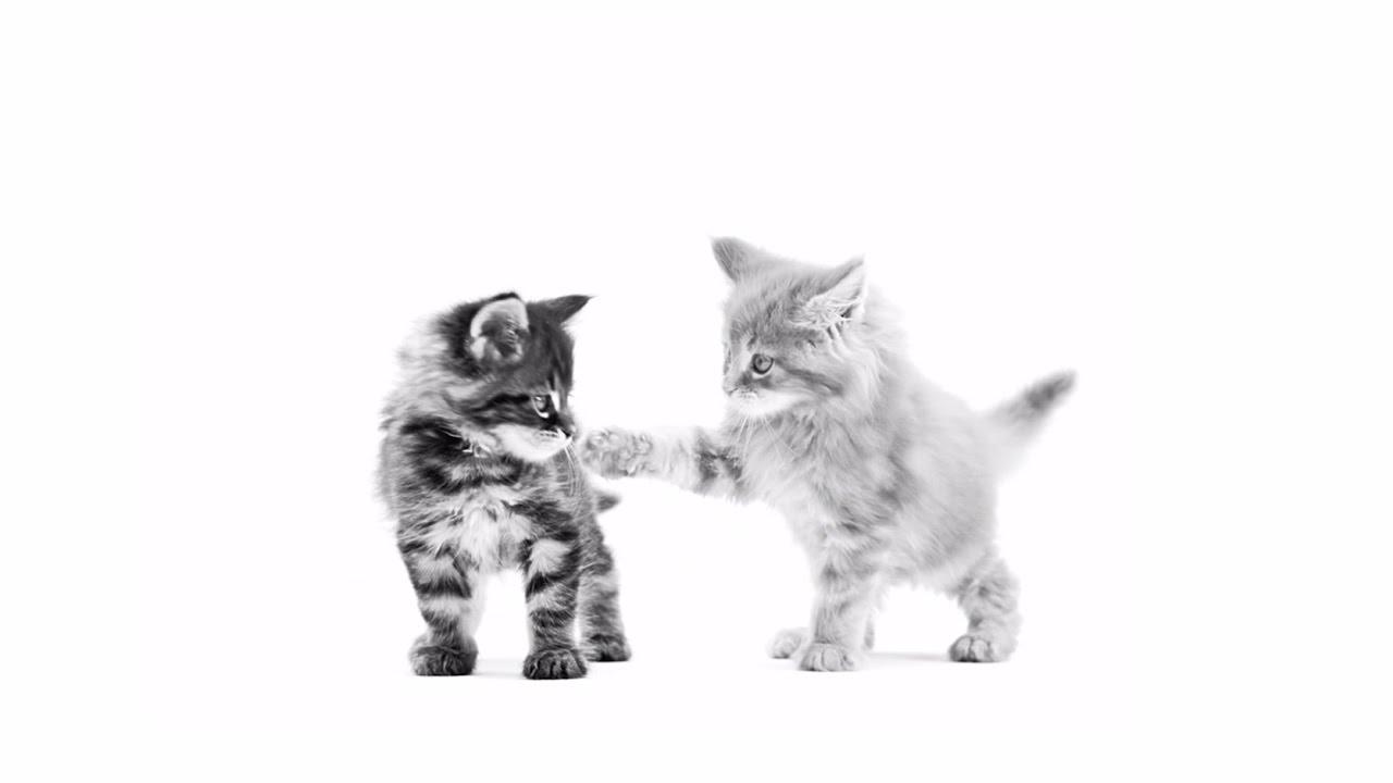 nové mačička trubice