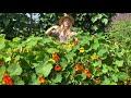 Nasturtium: Easy to Grow and Delicious!